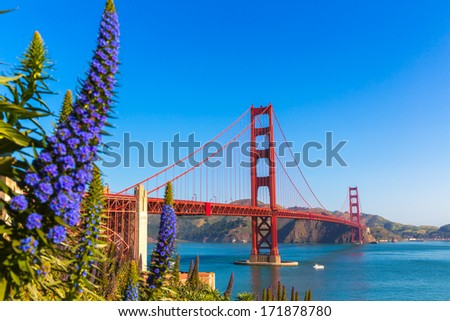 Golden Gate Bridge San Francisco purple flowers Echium candicans in California - stock photo
