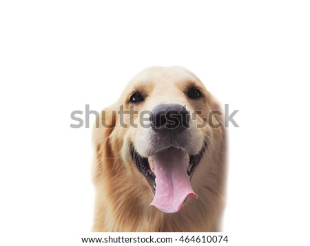 Golden good mood, bright, cheerful, happy dog on background.