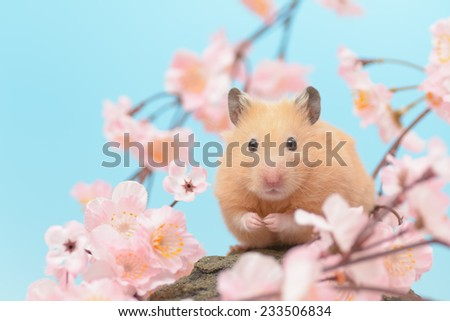 Golden Hamster and Cherry Blossoms. - stock photo