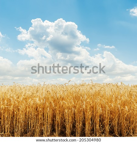golden harvest field and cloudy sky