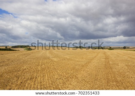 golden harvested wheat fields in the yorkshire wolds with trees and hedgerows under a blue stormy summer sky