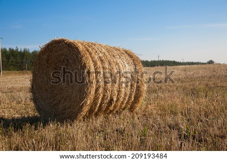 golden hay bales in the countryside - stock photo