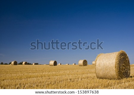 Golden hay bales on a clear summers day. - stock photo