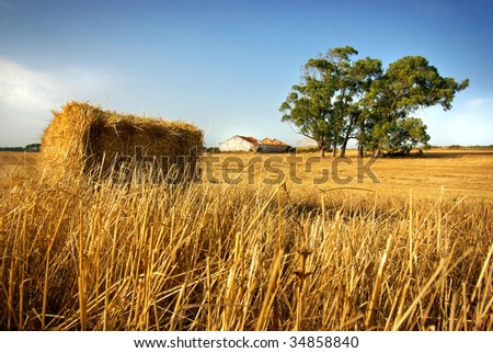 Golden hay stack in a rural field with old house and tree - stock photo