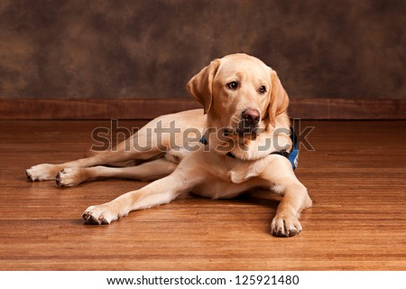 Dog laying Stock Photos, Illustrations, and Vector Art