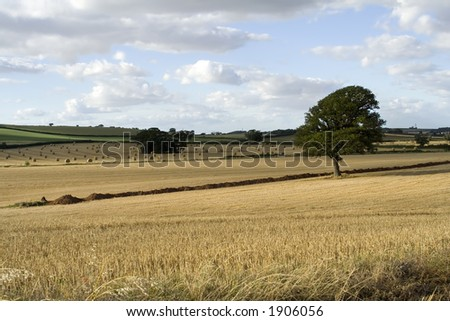 Golden landscape og a farmers field with hay roll's