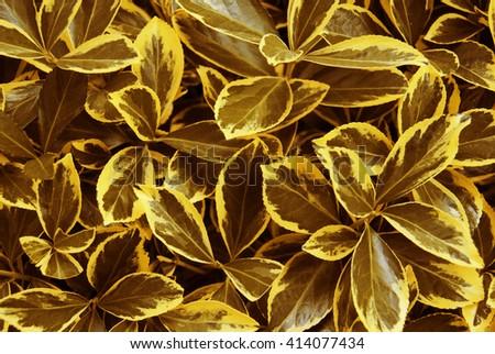 Golden Leaves - stock photo