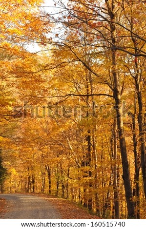 Golden leaves form a tunnel over a dirt road in the mountains of Vermont