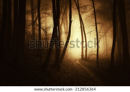 golden light in dark forest in autumn - stock photo
