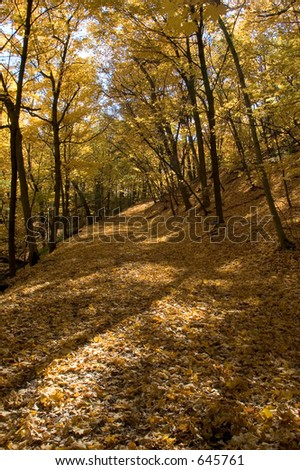 Golden maple trees lining walking path along the Mississippi River in Minneapolis - stock photo