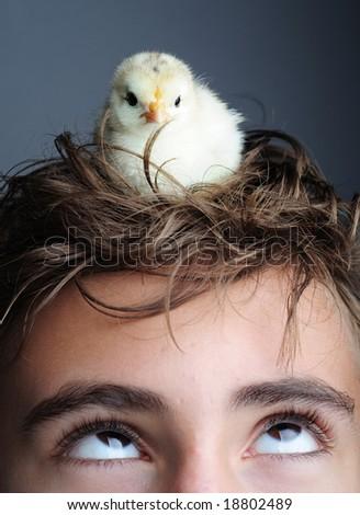 Golden newborn chick standing on boy head, close up - stock photo