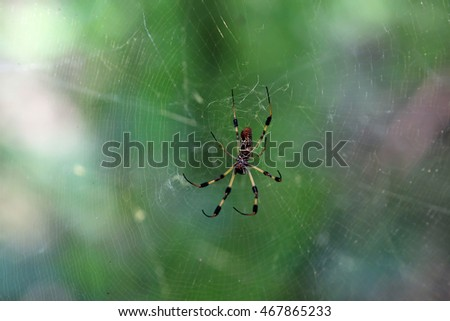 golden orb spider