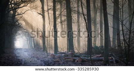 Golden rays of sunshine peaking through the misty winter forest - stock photo