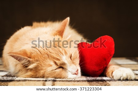 Golden red beautiful cat asleep hugging a small red plush heart toy. The concept of Valentine's Day - stock photo