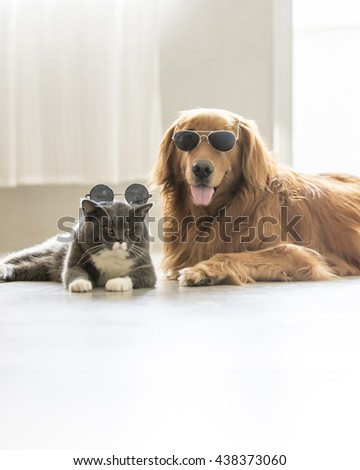 Image result for gray striped cat and Cocker spaniel