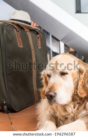Golden Retriever books out with her suitcase ready