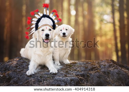 golden retriever dog and puppy in a native american headdress - stock photo