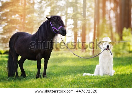 golden retriever dog in a cowboy hat holding a pony on a leash
