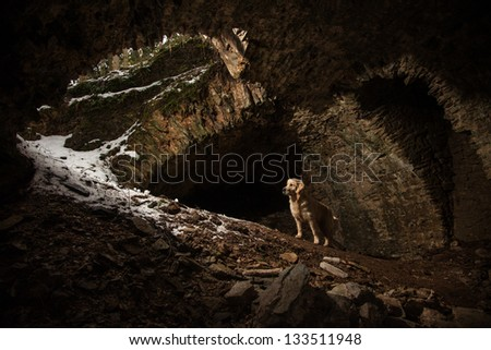 Golden Retriever dog in tunnel of old ruin - stock photo