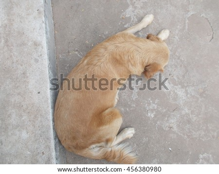 Golden retriever dog islying down. - stock photo