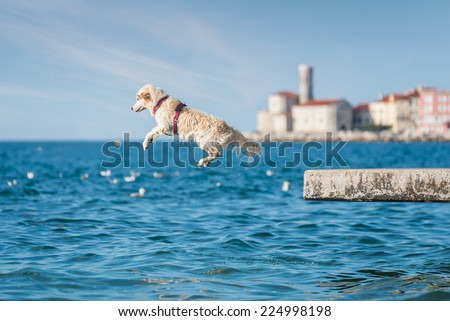 Golden Retriever dog jumping into sea - stock photo