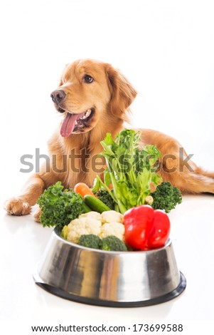 Golden Retriever dog laying vegetables in his food dish. - stock photo