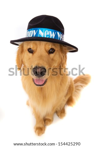 golden retriever dog on New Years Eve