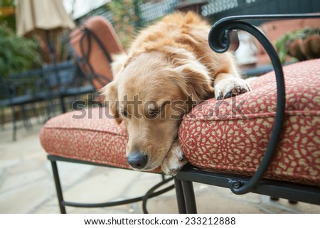 Golden retriever dog sleeps on patio furniture - stock photo