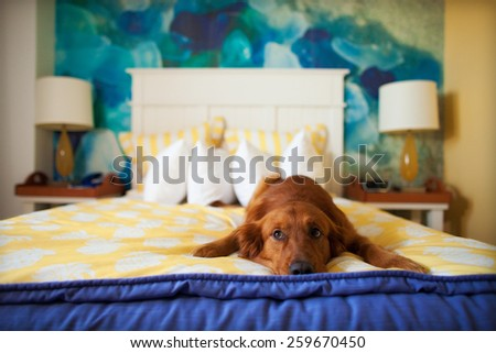 Sad Dog Stock Photos Images Amp Pictures Shutterstock