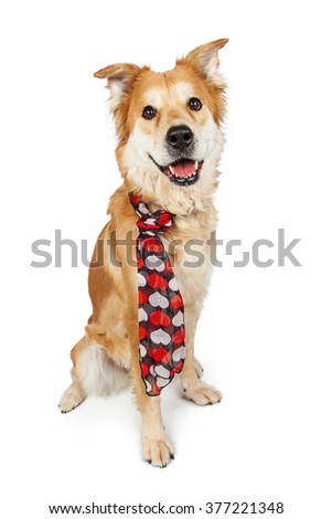 Golden Retriever mixed breed dog sitting over white wearing heart print scarf - stock photo