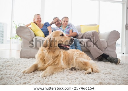 Golden Retriever on rug with family in background at home - stock photo