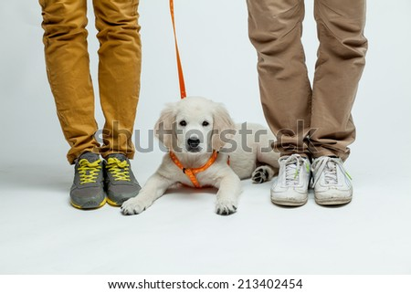 golden retriever puppy at the feet of masters - stock photo