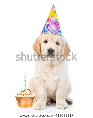 Golden retriever puppy in birthday hat with cake looking at camera. isolated on white background
