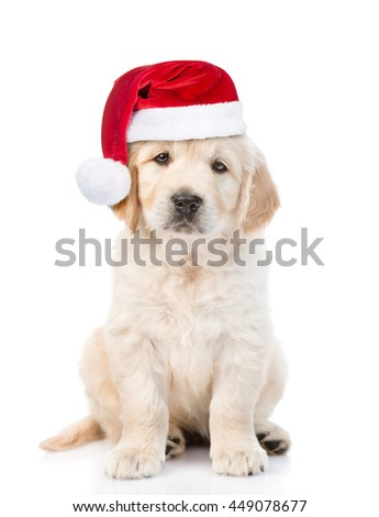 Golden retriever puppy in red christmas hat. isolated on white background