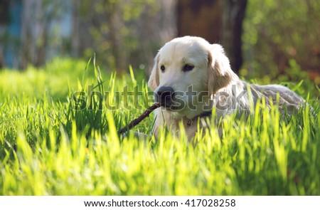 cute maltese dog sitting grass stock photo 137913404. Black Bedroom Furniture Sets. Home Design Ideas