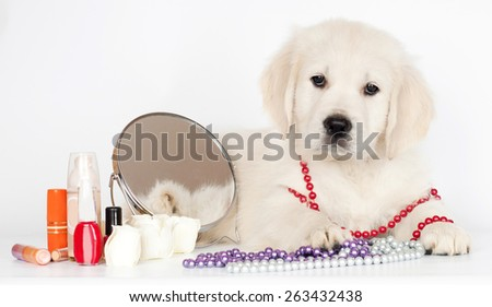 golden retriever puppy with make up - stock photo