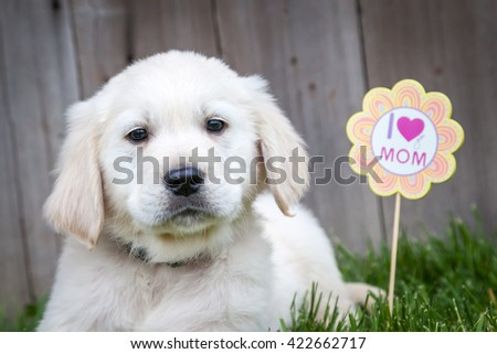 Golden retriever puppy with Mothers day sign