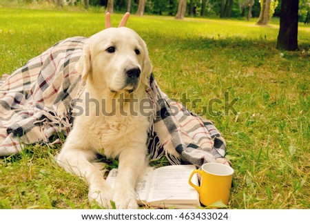 Golden Retriever reading a book in a park wrapped plaid