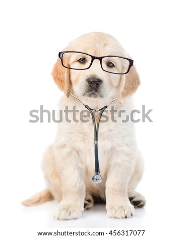 Golden retriever with a glasses and stethoscope on his neck.looking at camera. isolated on white background
