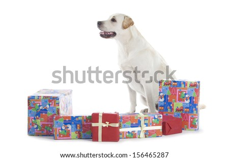 Golden Retriever with Christmas gifts isolated over white background