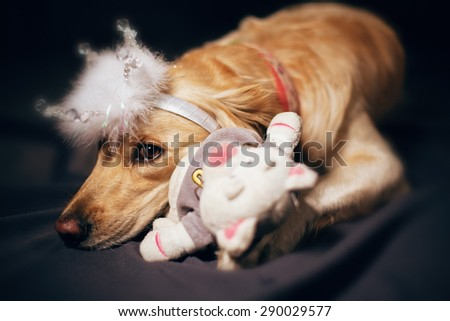 Golden retriever with toy and crown