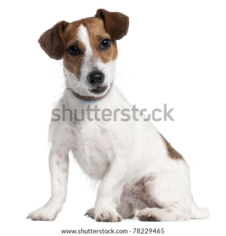 Golden Retriever, 5 years old, sitting in front of white background - stock photo
