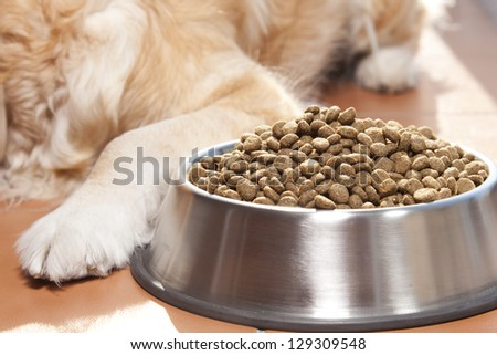 Golden retriver close to his cavity of fodder - stock photo