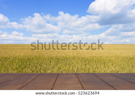 Golden rice fields of the spring and wooden floor. Blue sky background