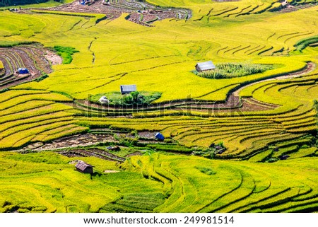 Golden rice terraces of the H'mong minority people in Y Ty, Lao Cai, Vietnam. - stock photo