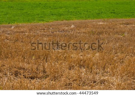 Golden straw and green grass - stock photo