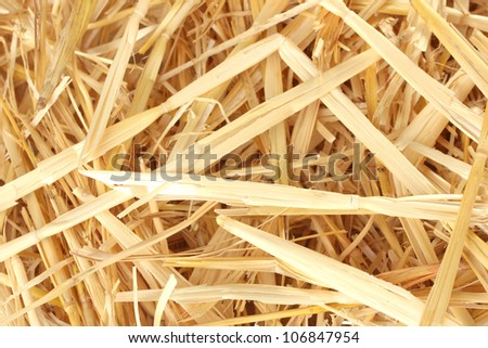 Golden straw texture background close-up - stock photo