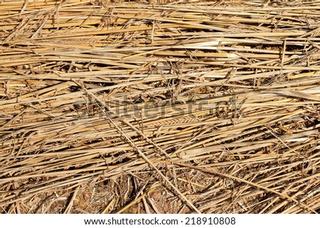 Golden straw texture pressed flat after Summer harvest in rural England - stock photo