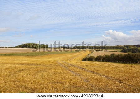 golden stubble fields with woodland under a patterned sky at harvest time in autumn in the yorkshire wolds