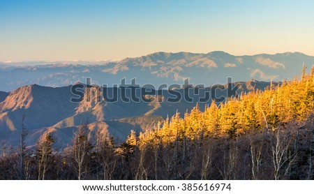 Golden sun light on tree forest and mountain ranges in the evening. The ranges are in Yamanashi prefectures, Japan.